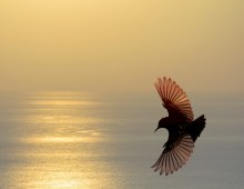 Golden Wings Advanced Healing